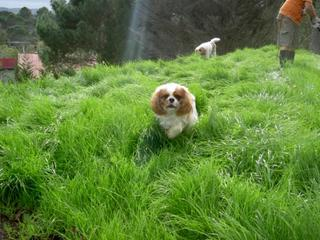 I love running through the grass